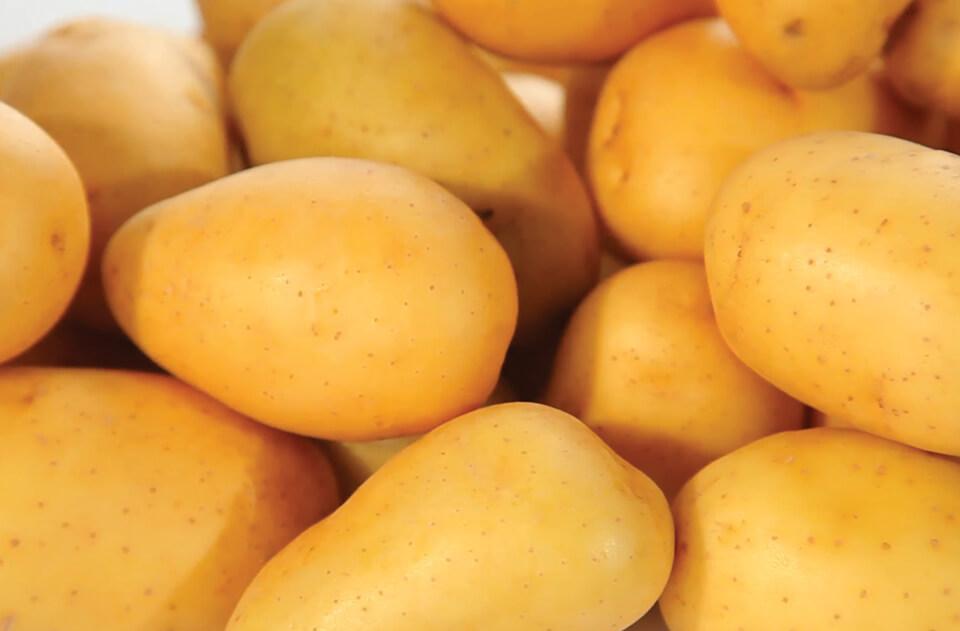 India- High output keeps potato prices down